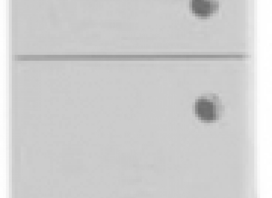 13.33 (3) Шкаф 21 Эко+